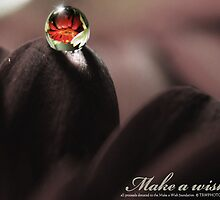 Second Take - Make A Wish  by trwphotography