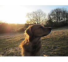 sonny at dawn Photographic Print