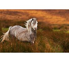 A809 Horse Photographic Print