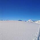 Ski tracks in fresh powder by Peak Photographics