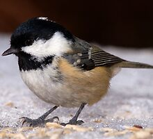 Coal Tit by Roger Butterfield