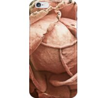 Old rose - Faded romance iPhone Case/Skin