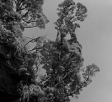 Doubtful Tree by Ian Robertson