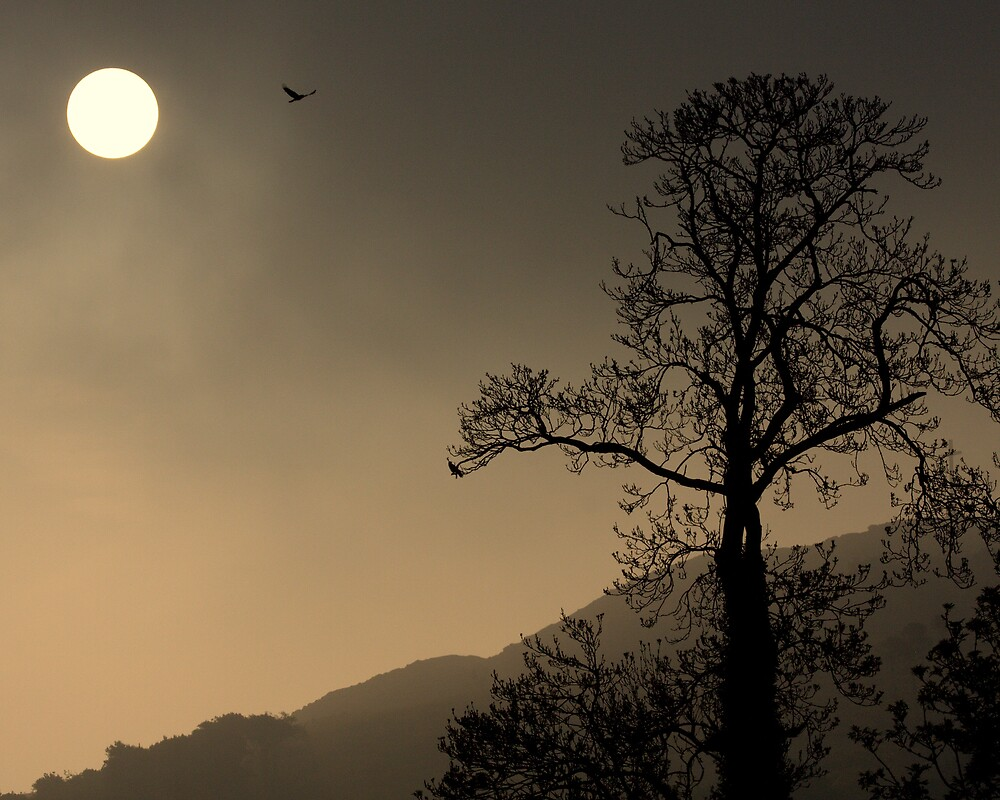 Icarus Sunrise Bird by Steiner62
