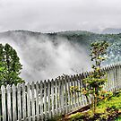 Nesting Fog by Monnie Ryan