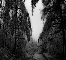The Road Less Traveled by Jason Lee Jodoin