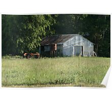 Old Sugar Cane Farm shed, Smithfield Poster