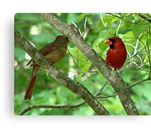 Northern Cardinal Pair - female and male Canvas Print
