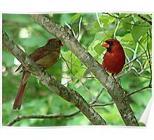 Northern Cardinal Pair - female and male Poster
