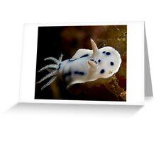 Nudibranch Greeting Card