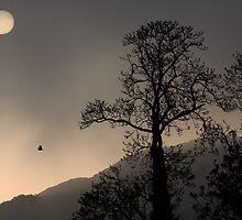 Sunrise Haiku by Anima Fotografie