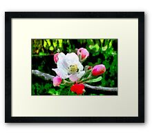 A digital painting of Apple Blossom in Romania Framed Print