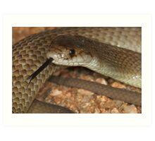 Pygmy mulga snake Art Print
