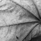 Leaf. Black and White by Tracy Faught