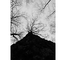 Up A Tree Photographic Print