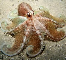 Octopus Spread. by James Peake Nature Photography.