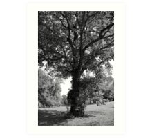 Tall Tree Art Print