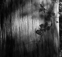 Leaf Shadow by rdshaw