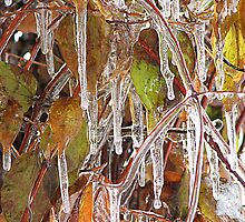 Icy Clematis by Carole Brunet