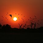 African Sunset by Kevin Jeffery