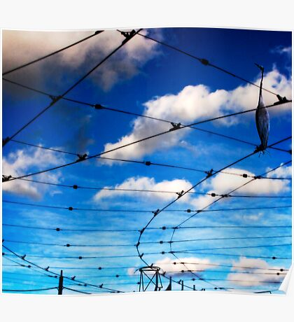 urban birdcage Poster