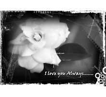 I Love you Always....... Photographic Print