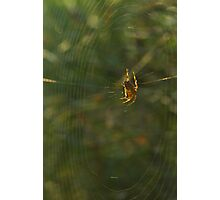 Golden Spider Dreams  Photographic Print