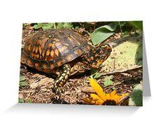 Eastern Box Turtle   Greeting Card