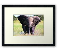 Young Elephant Bull Charging Framed Print