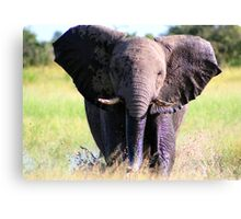 Young Elephant Bull Charging Canvas Print