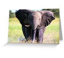 Young Elephant Bull Charging Greeting Card