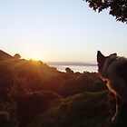 Watching the sunset with Indy by Michael Haslam