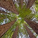 Colossal Canopy by John Butler