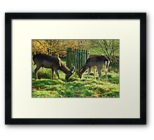 Whos going to make the first move? Framed Print