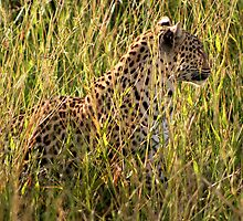Camouflaged Leopard by Kevin Jeffery