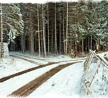 Trail by dmark3