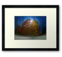 coloured trees Framed Print