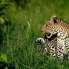 Leopard by Kevin Jeffery