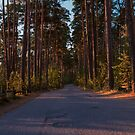 Pine Forest Road by Johannes Valkama