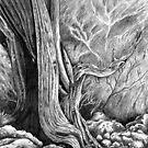 Skull Forest by Craig Medeiros