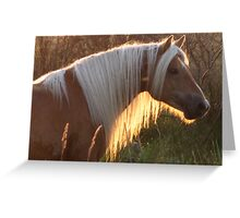 Horse in the sunset Greeting Card