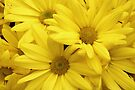 Yellow Flower Group by Adam Bykowski