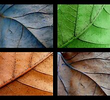 FALL COLLAGE by stacyrod