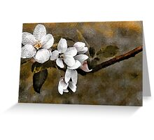 Apple Blossoms - N. Waterford, Maine Greeting Card