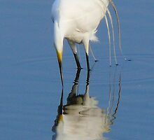 Egret Strike by Charlie Sawyer