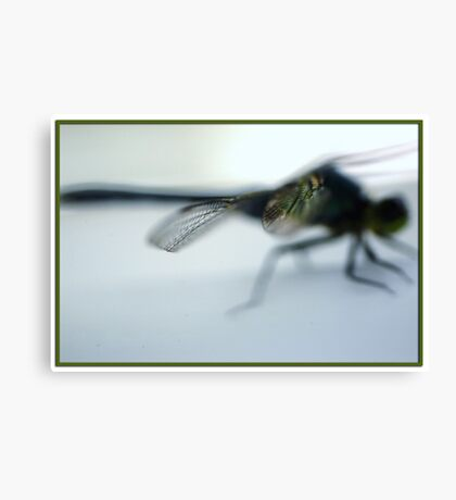 Macro shot of a portion of a dragon fly wing Canvas Print
