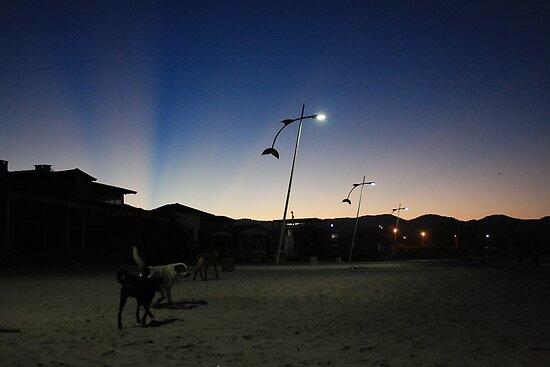 stray dogs, barra de lagoa, brazil by nickaldridge