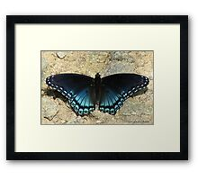I'll Dazzle You With My Back Side Framed Print