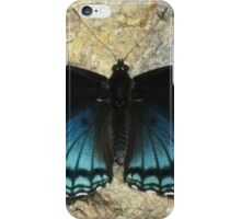 I'll Dazzle You With My Back Side iPhone Case/Skin
