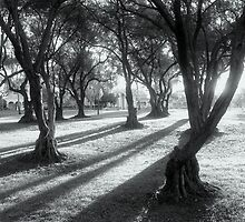 Mystic olive by Kablwerk